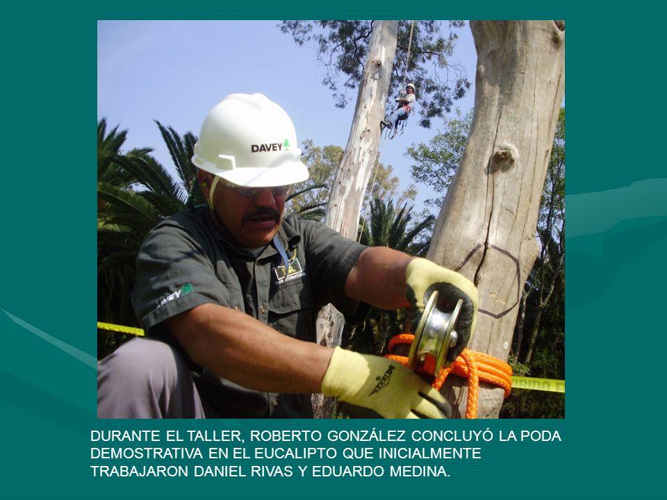 DURANTE EL TALLER, ROBERTO GONZÁLEZ CONCLUYÓ LA PODA DEMOSTRATIVA EN EL EUCALIPTO QUE INICIALMENTE TRABAJARON DANIEL RIVAS Y EDUARDO MEDINA.
