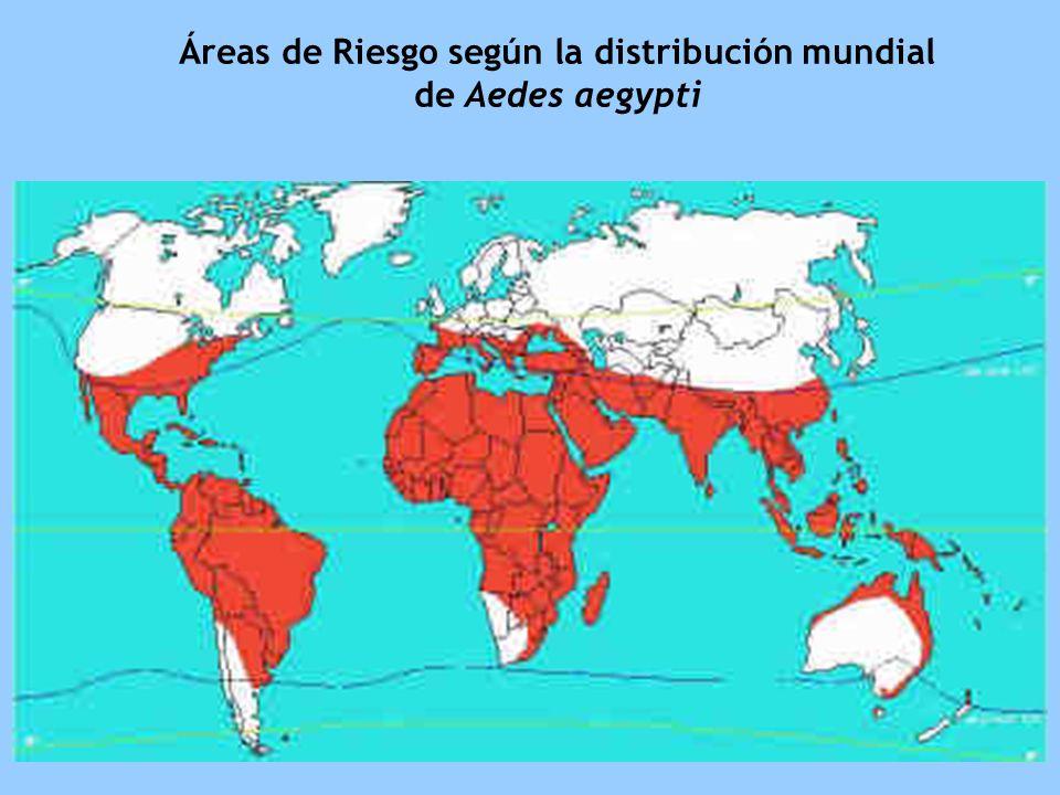 Áreas de Riesgo según la distribución mundial de Aedes aegypti