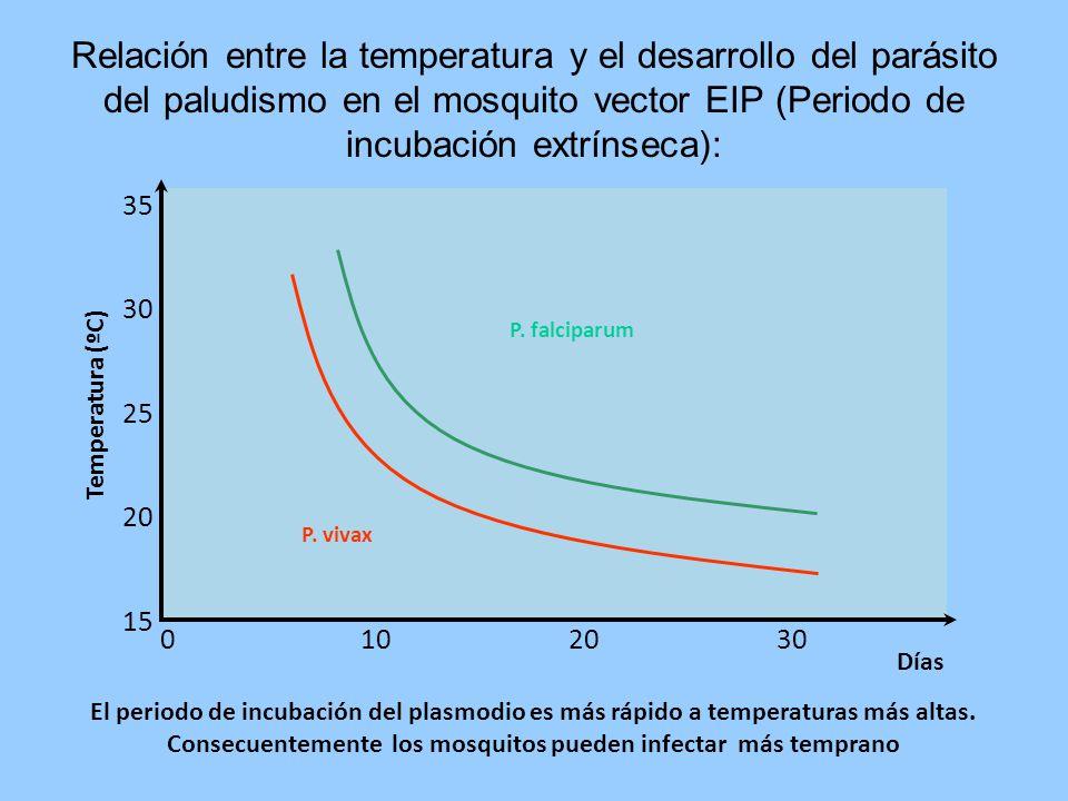 Relación entre la temperatura y el desarrollo del parásito del paludismo en el mosquito vector EIP (Periodo de incubación extrínseca): 15 20 25 30 35 3020100 Días Temperatura (ºC) P.