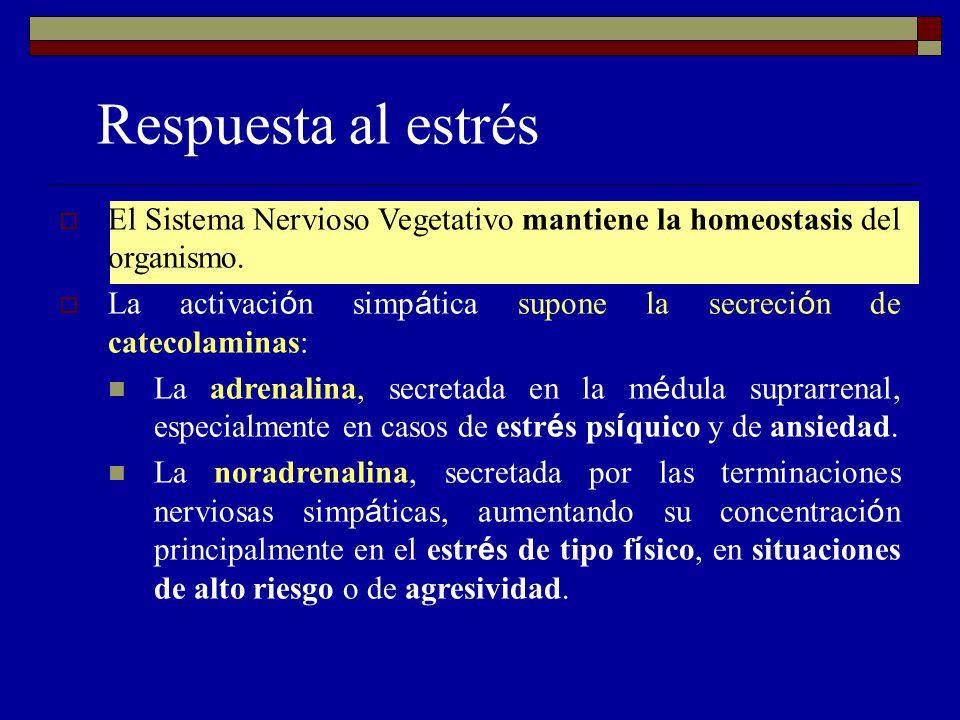 Respuesta al estrés El Sistema Nervioso Vegetativo mantiene la homeostasis del organismo. La activaci ó n simp á tica supone la secreci ó n de catecol