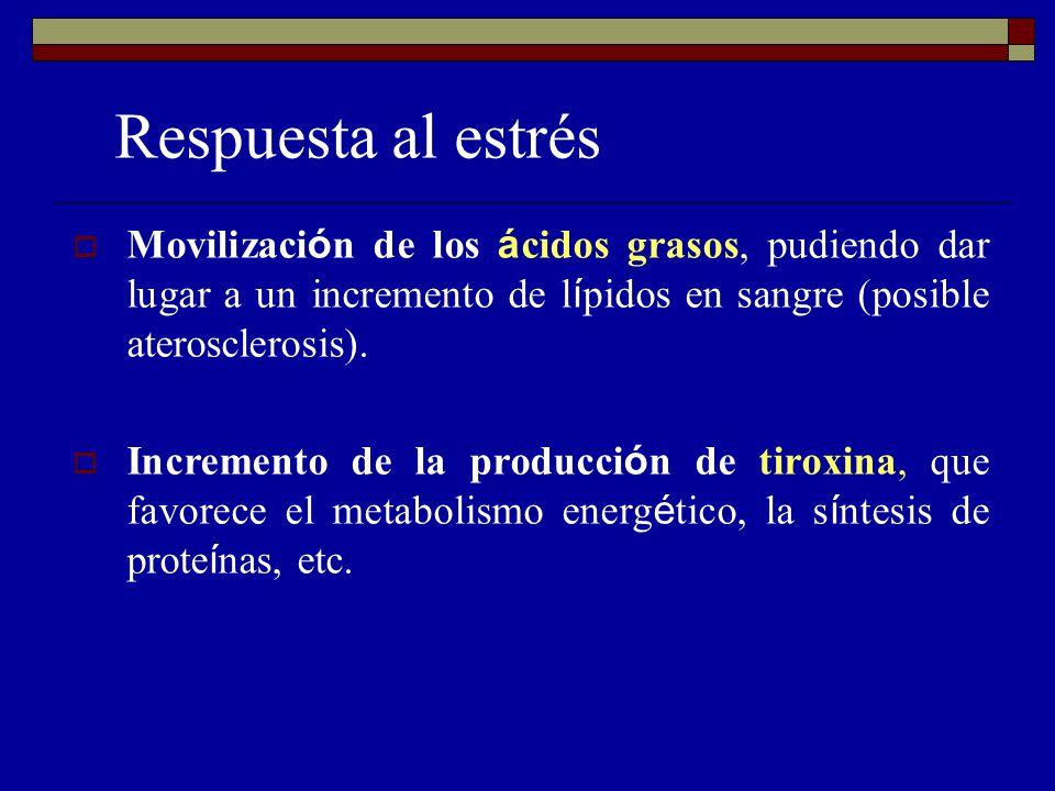 Respuesta al estrés Movilizaci ó n de los á cidos grasos, pudiendo dar lugar a un incremento de l í pidos en sangre (posible aterosclerosis).