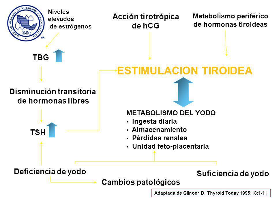 Niveles elevados de estrógenos TBG Disminución transitoria de hormonas libres TSH ESTIMULACION TIROIDEA Acción tirotrópica de hCG Metabolismo periférico de hormonas tiroideas METABOLISMO DEL YODO Ingesta diaria Almacenamiento Pérdidas renales Unidad feto-placentaria Deficiencia de yodo Suficiencia de yodo Cambios patológicos Adaptada de Glinoer D.