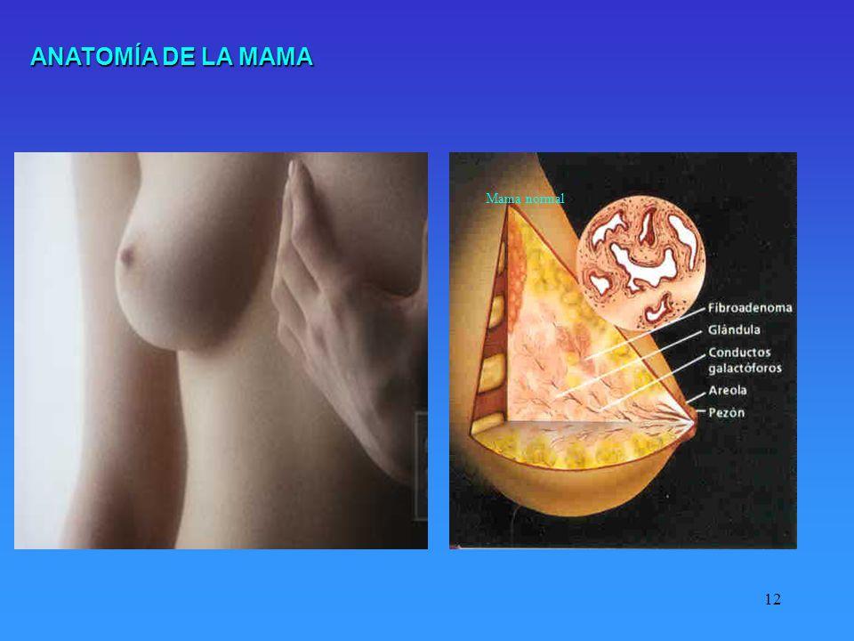 12 Mama normal ANATOMÍA DE LA MAMA