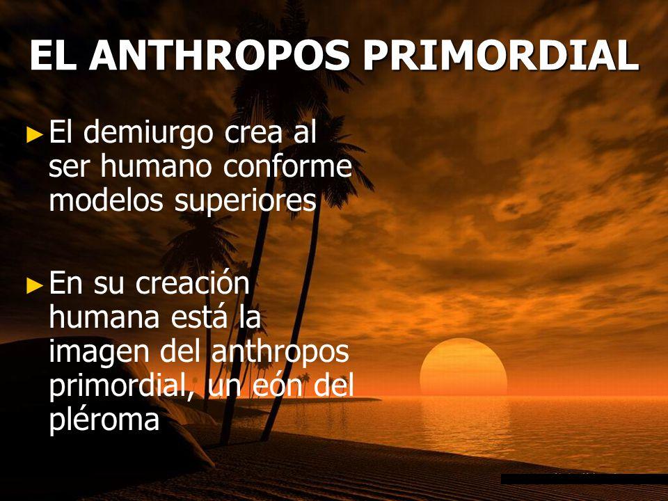 EL ANTHROPOS PRIMORDIAL El demiurgo crea al ser humano conforme modelos superiores En su creación humana está la imagen del anthropos primordial, un eón del pléroma