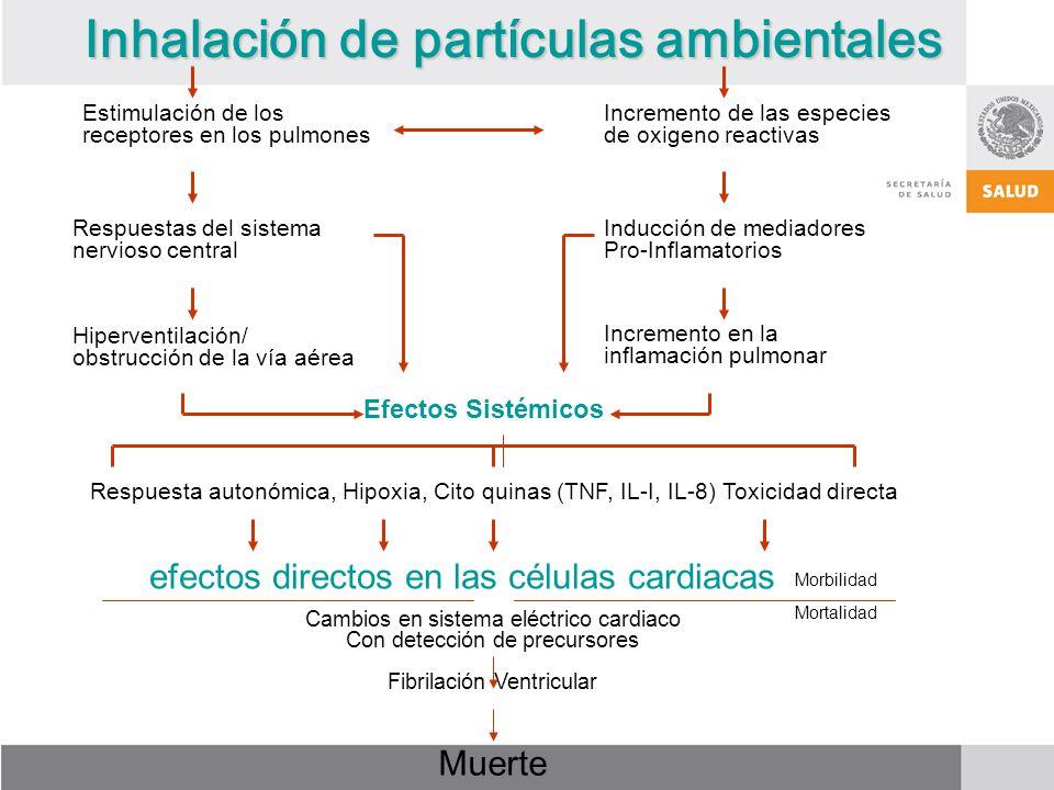 Inhalación de partículas ambientales Estimulación de los receptores en los pulmones Incremento de las especies de oxigeno reactivas Respuestas del sistema nervioso central Inducción de mediadores Pro-Inflamatorios Hiperventilación/ obstrucción de la vía aérea Incremento en la inflamación pulmonar Efectos Sistémicos Respuesta autonómica, Hipoxia, Cito quinas (TNF, IL-I, IL-8) Toxicidad directa efectos directos en las células cardiacas Cambios en sistema eléctrico cardiaco Con detección de precursores Fibrilación Ventricular Muerte Morbilidad Mortalidad