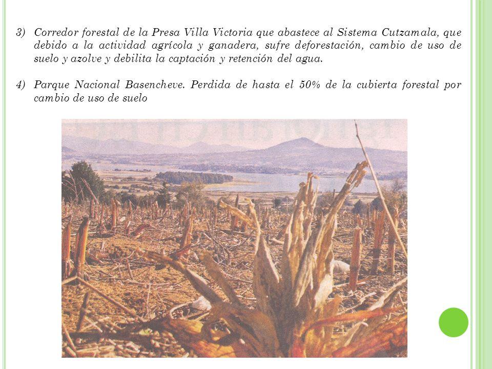 ALGUNAS OPCIONES 1)Consejo de Manejo Forestal 2)CONAFOR 3)Planes de Reubicación 4)Fomento de Plantaciones Comerciales.