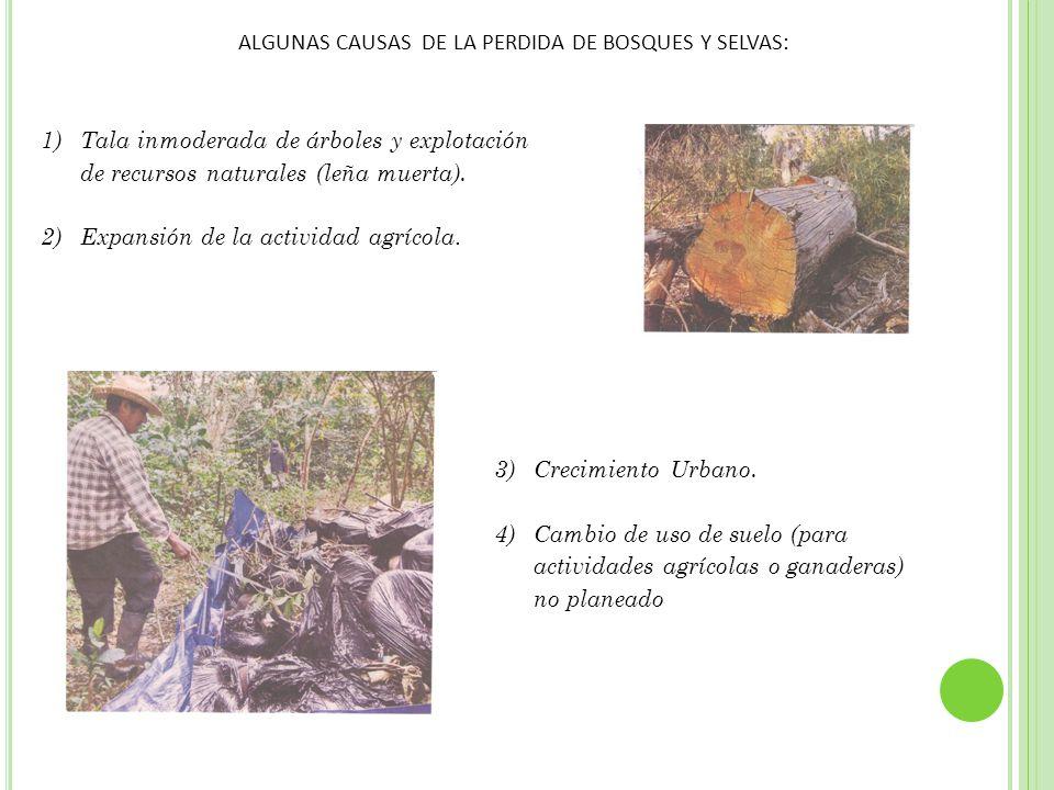 5)Acumulación de basura. 6)Plagas. 7)Incendios. 8)Quemas Agrícolas.