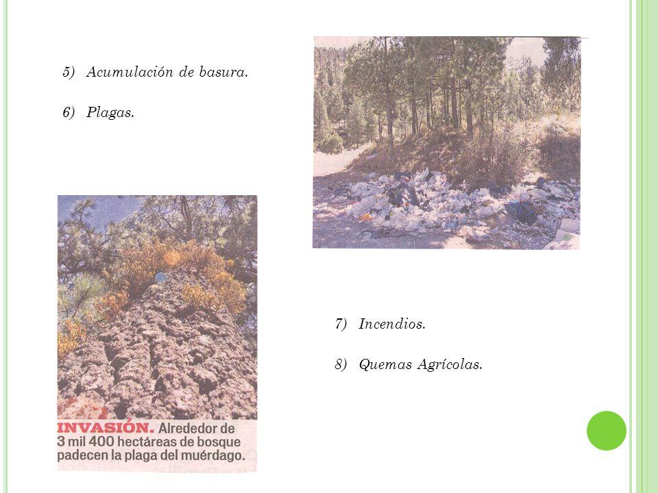 9)Cambio climático. 10)Conflictos por la posesión de la tierra. 11)Falta de una política ambiental.