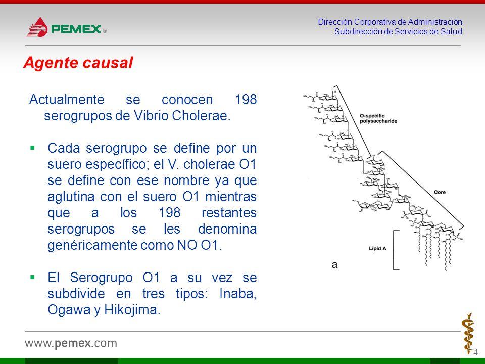 Dirección Corporativa de Administración Subdirección de Servicios de Salud 4 Agente causal Actualmente se conocen 198 serogrupos de Vibrio Cholerae.