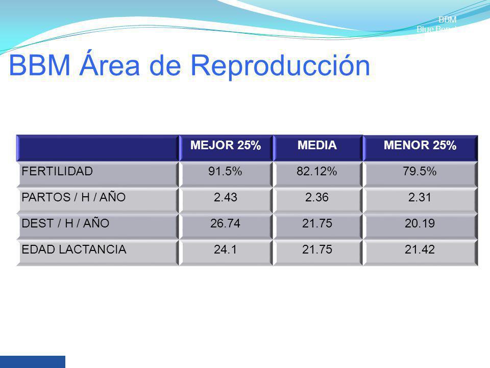 BBM Área de Reproducción MEJOR 25%MEDIAMENOR 25% FERTILIDAD91.5%82.12%79.5% PARTOS / H / AÑO2.432.362.31 DEST / H / AÑO26.7421.7520.19 EDAD LACTANCIA2