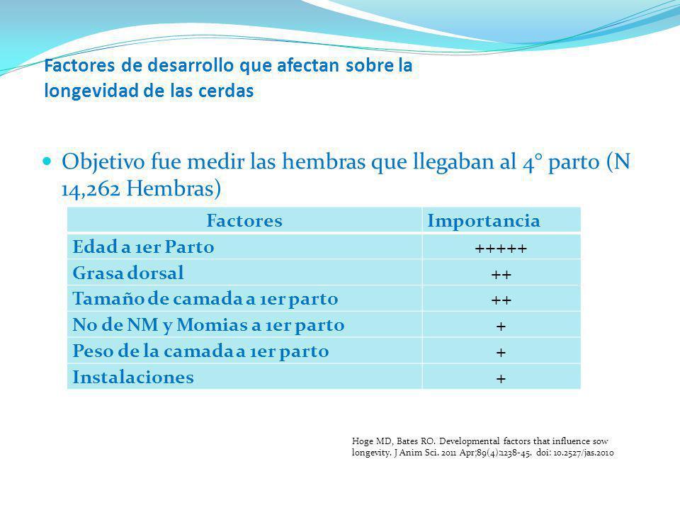 Factores de desarrollo que afectan sobre la longevidad de las cerdas Objetivo fue medir las hembras que llegaban al 4° parto (N 14,262 Hembras) Factor