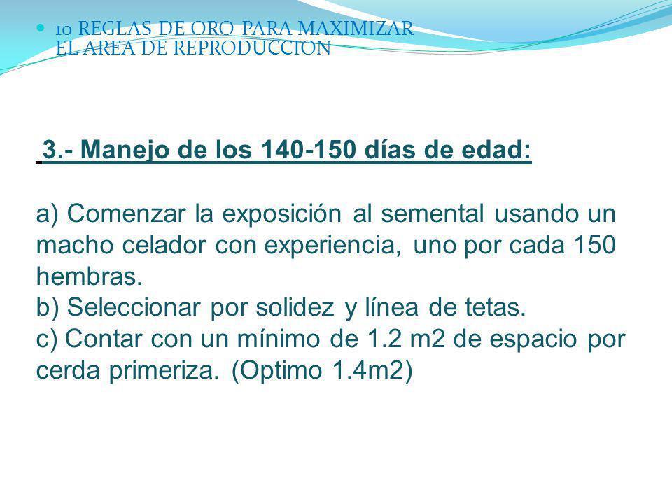 10 REGLAS DE ORO PARA MAXIMIZAR EL AREA DE REPRODUCCION 3.- Manejo de los 140-150 días de edad: a) Comenzar la exposición al semental usando un macho