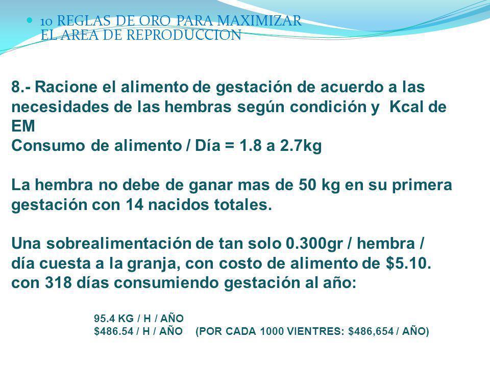 10 REGLAS DE ORO PARA MAXIMIZAR EL AREA DE REPRODUCCION 8.- Racione el alimento de gestación de acuerdo a las necesidades de las hembras según condici