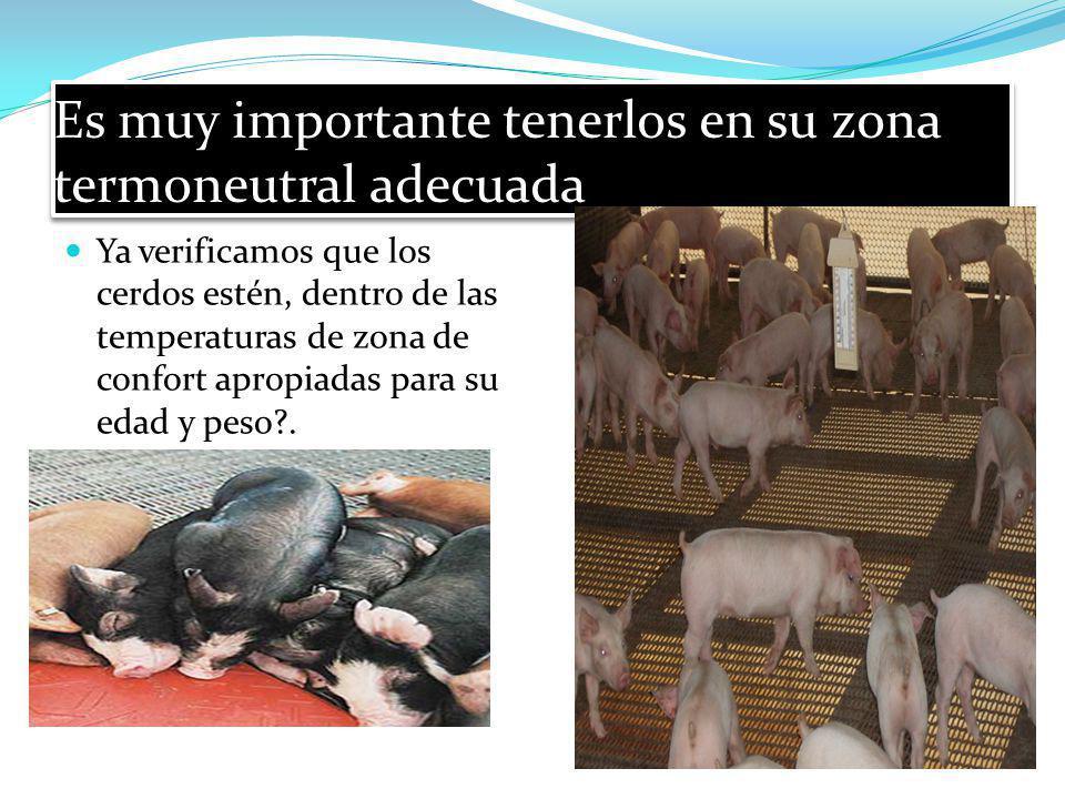 Es muy importante tenerlos en su zona termoneutral adecuada Ya verificamos que los cerdos estén, dentro de las temperaturas de zona de confort apropia