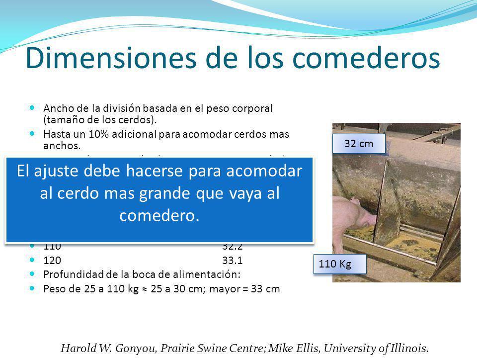 Dimensiones de los comederos Ancho de la división basada en el peso corporal (tamaño de los cerdos). Hasta un 10% adicional para acomodar cerdos mas a