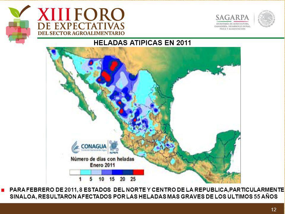 HELADAS ATIPICAS EN 2011 PARA FEBRERO DE 2011, 8 ESTADOS DEL NORTE Y CENTRO DE LA REPUBLICA,PARTICULARMENTE SINALOA, RESULTARON AFECTADOS POR LAS HELA