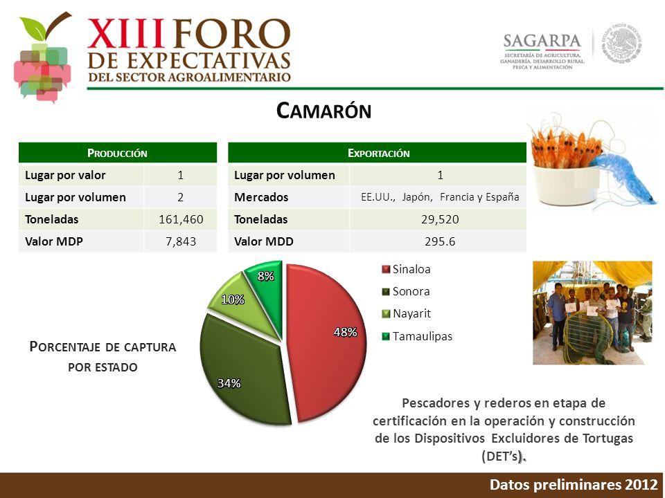 C AMARÓN Datos preliminares 2012 P ORCENTAJE DE CAPTURA POR ESTADO ). Pescadores y rederos en etapa de certificación en la operación y construcción de