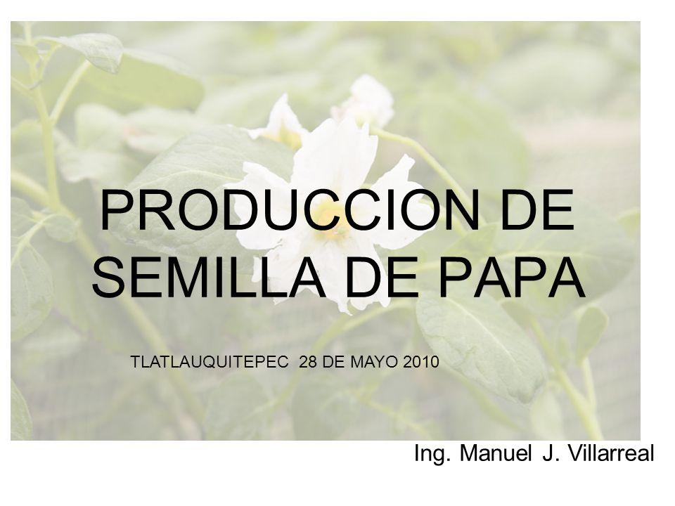 LA PRODUCCION DE SEMILLA DE PAPA a)Una necesidad.La semilla es la base del éxito.