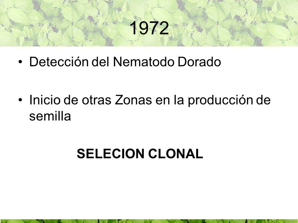 PRODUCCIÓN CLONAL