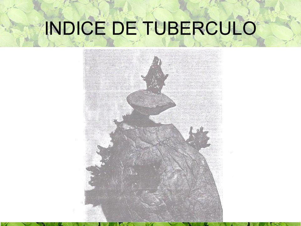 LIDER INDICE TUBERCULO LIDER INDICE DE TUBERCULO 1ER AÑO 3ER.