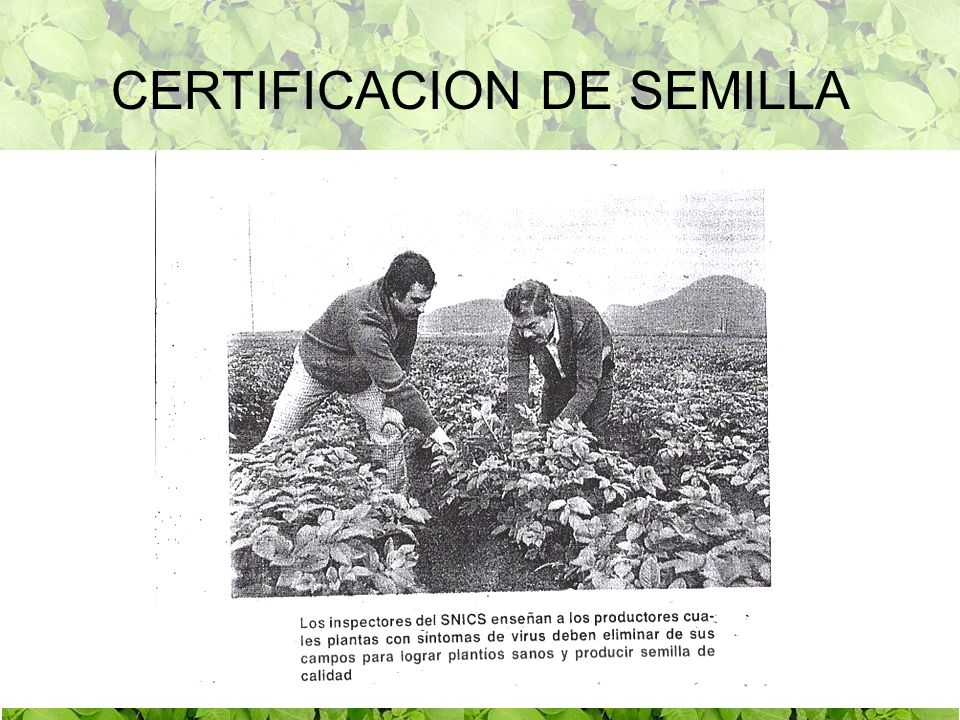 ZONAS PRODUCTORAS DE SEMILLA CERTIFICADA DE PAPA