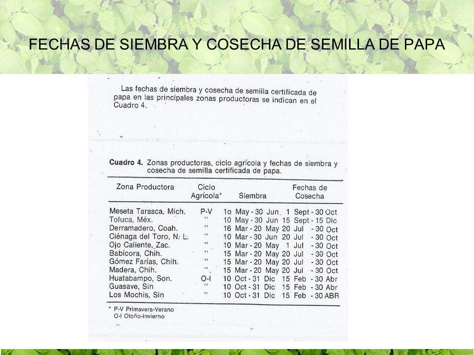 1975 Detección de Pseudomonas solanacearum Cierre de Algunas Zonas Productoras de semilla