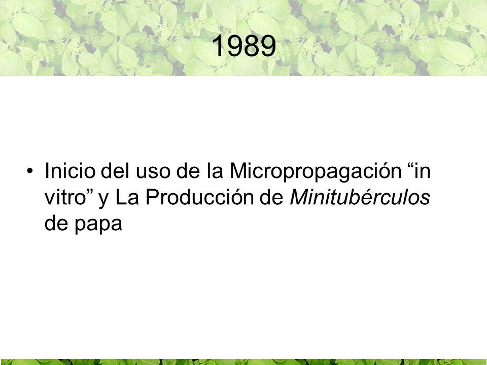 1989 Inicio del uso de la Micropropagación in vitro y La Producción de Minitubérculos de papa