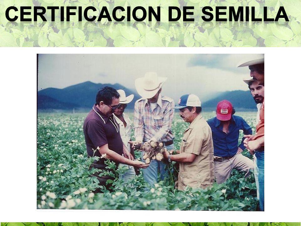 1957 Inicio de La Producción Certificada de Papa Establecimiento de Zonas Especializadas: Zonas Productoras, Surtidoras Autosuficientes.