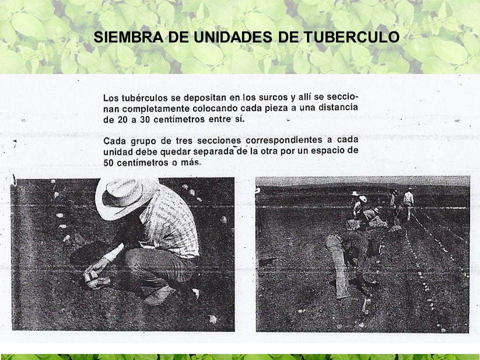 UNIDADES DE TUBERCULOS A C BA C B D A B C A B C D UNIDAD DE 3 UNIDAD DE 4