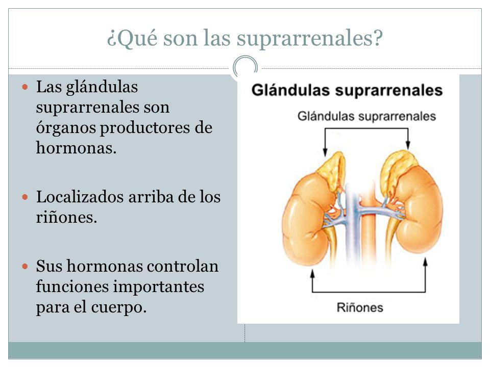 ¿Qué son las suprarrenales? Las glándulas suprarrenales son órganos productores de hormonas. Localizados arriba de los riñones. Sus hormonas controlan