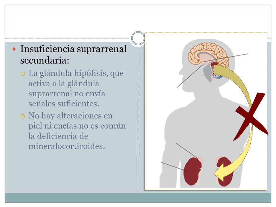Insuficiencia suprarrenal secundaria: La glándula hipófisis, que activa a la glándula suprarrenal no envía señales suficientes. No hay alteraciones en