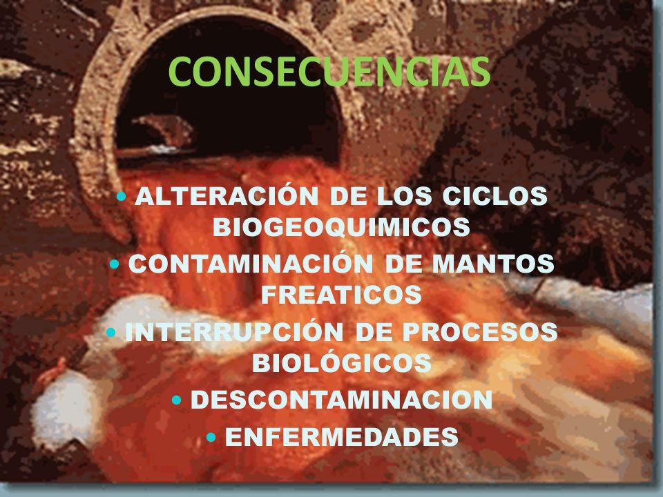 CONSECUENCIAS ALTERACIÓN DE LOS CICLOS BIOGEOQUIMICOS CONTAMINACIÓN DE MANTOS FREATICOS INTERRUPCIÓN DE PROCESOS BIOLÓGICOS DESCONTAMINACION ENFERMEDADES