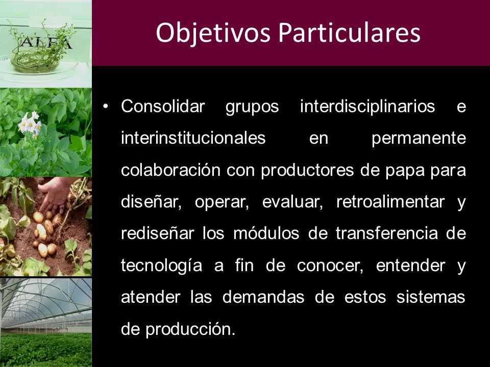 Objetivos Particulares Consolidar grupos interdisciplinarios e interinstitucionales en permanente colaboración con productores de papa para diseñar, o
