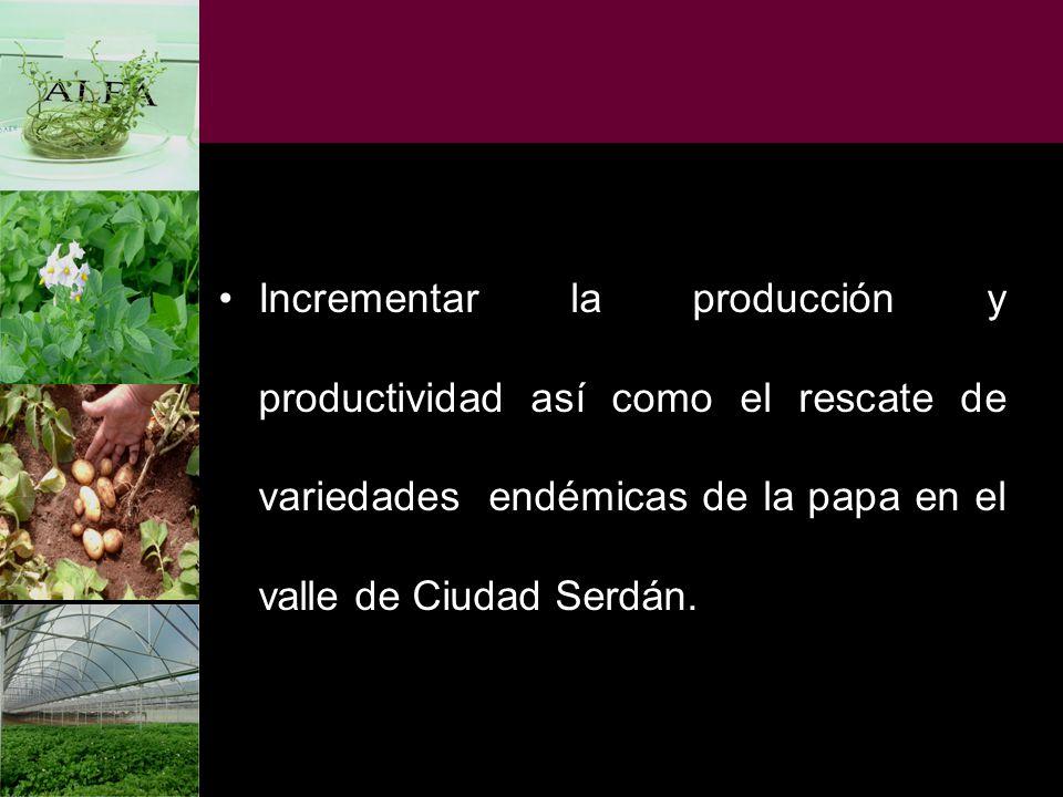 Incrementar la producción y productividad así como el rescate de variedades endémicas de la papa en el valle de Ciudad Serdán.