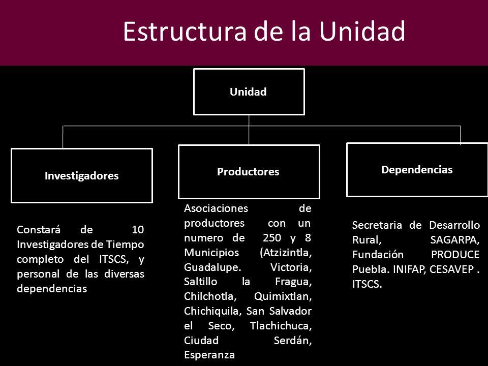 Estructura de la Unidad Unidad Investigadores Productores Dependencias Constará de 10 Investigadores de Tiempo completo del ITSCS, y personal de las d