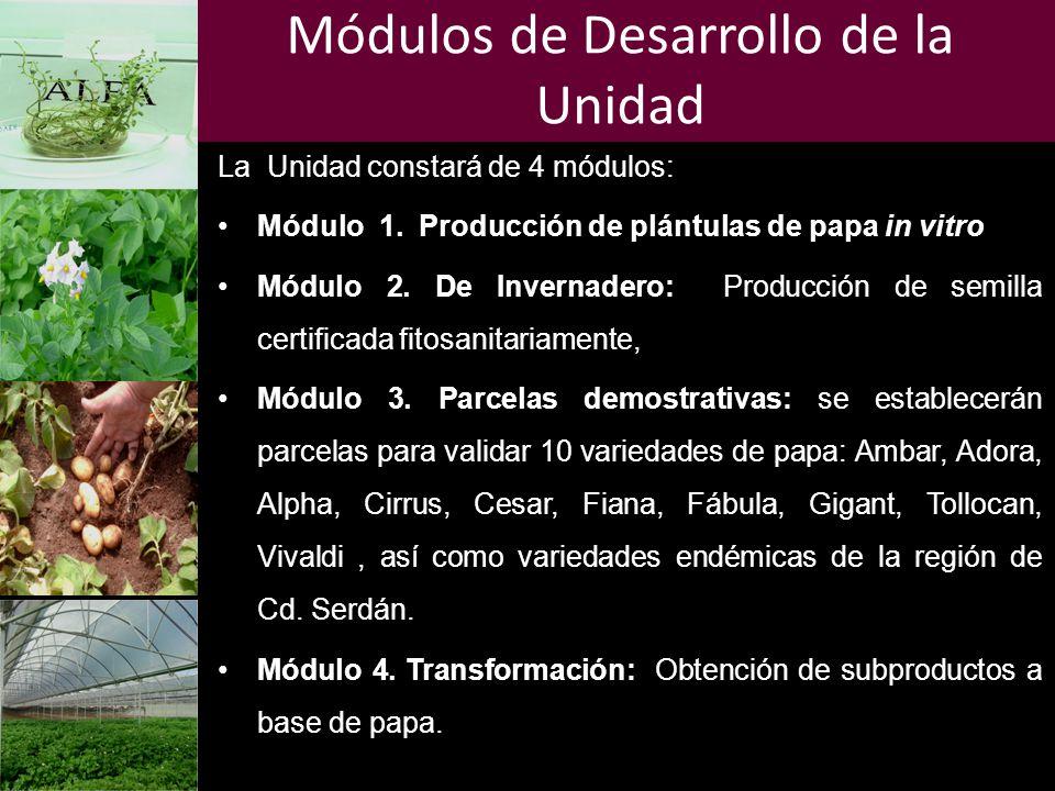 Módulos de Desarrollo de la Unidad La Unidad constará de 4 módulos: Módulo 1. Producción de plántulas de papa in vitro Módulo 2. De Invernadero: Produ