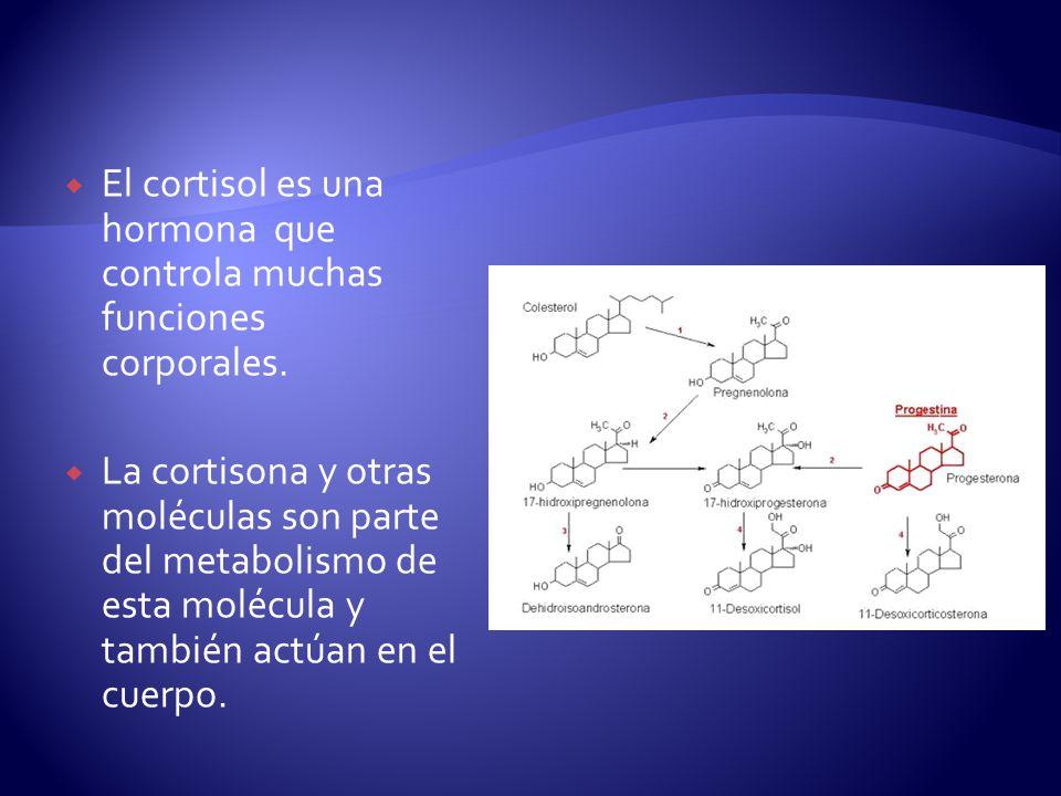 El cortisol es una hormona que controla muchas funciones corporales. La cortisona y otras moléculas son parte del metabolismo de esta molécula y tambi
