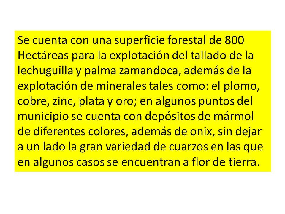 Se cuenta con una superficie forestal de 800 Hectáreas para la explotación del tallado de la lechuguilla y palma zamandoca, además de la explotación d