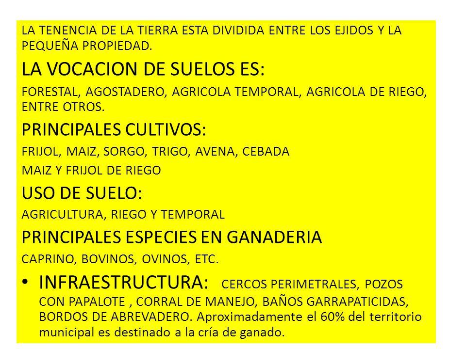 LA TENENCIA DE LA TIERRA ESTA DIVIDIDA ENTRE LOS EJIDOS Y LA PEQUEÑA PROPIEDAD. LA VOCACION DE SUELOS ES: FORESTAL, AGOSTADERO, AGRICOLA TEMPORAL, AGR