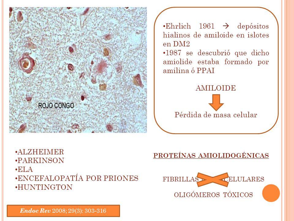 Ehrlich 1961 depósitos hialinos de amiloide en islotes en DM2 1987 se descubrió que dicho amiolide estaba formado por amilina ó PPAI AMILOIDE Pérdida