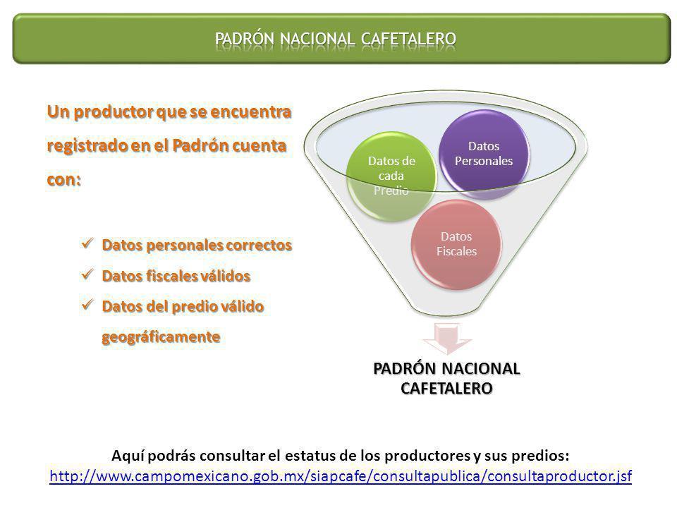 PADRÓN NACIONAL CAFETALERO Datos Fiscales Datos de cada Predio Datos Personales Un productor que se encuentra registrado en el Padrón cuenta con: Dato