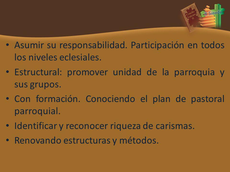 Asumir su responsabilidad. Participación en todos los niveles eclesiales. Estructural: promover unidad de la parroquia y sus grupos. Con formación. Co
