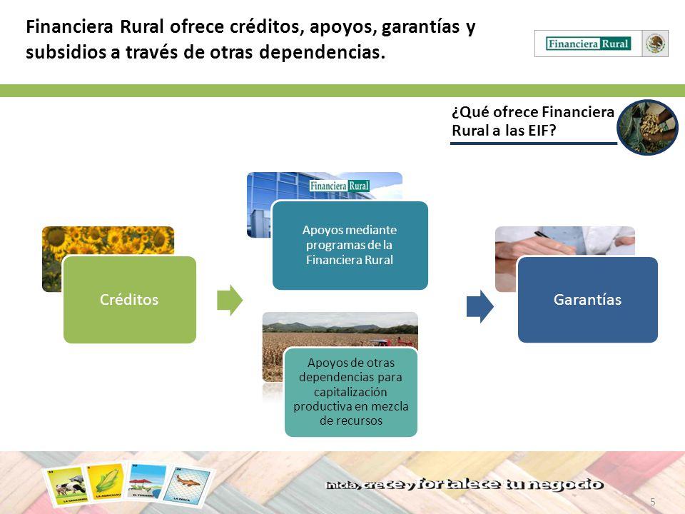 5 ¿Qué ofrece Financiera Rural a las EIF? Financiera Rural ofrece créditos, apoyos, garantías y subsidios a través de otras dependencias. Apoyos de ot