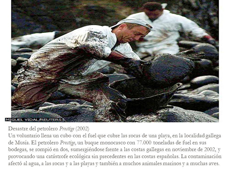 Desastre del petrolero Prestige (2002) Un voluntario llena un cubo con el fuel que cubre las rocas de una playa, en la localidad gallega de Musía. El