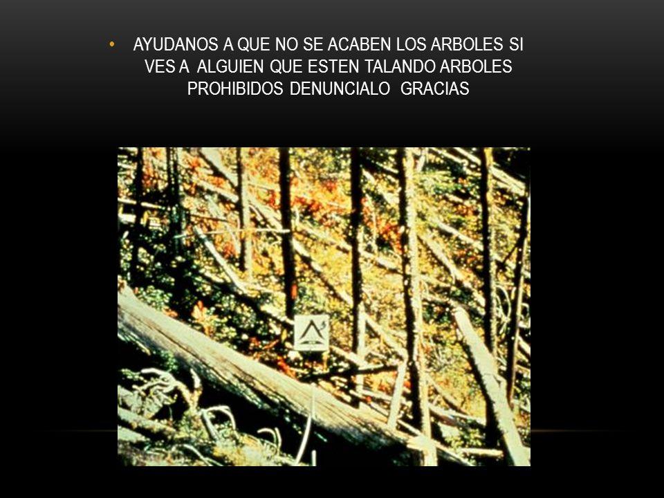 AYUDANOS A QUE NO SE ACABEN LOS ARBOLES SI VES A ALGUIEN QUE ESTEN TALANDO ARBOLES PROHIBIDOS DENUNCIALO GRACIAS