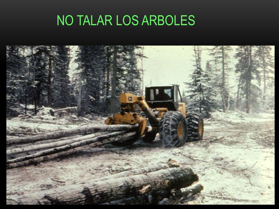 NO TALAR LOS ARBOLES