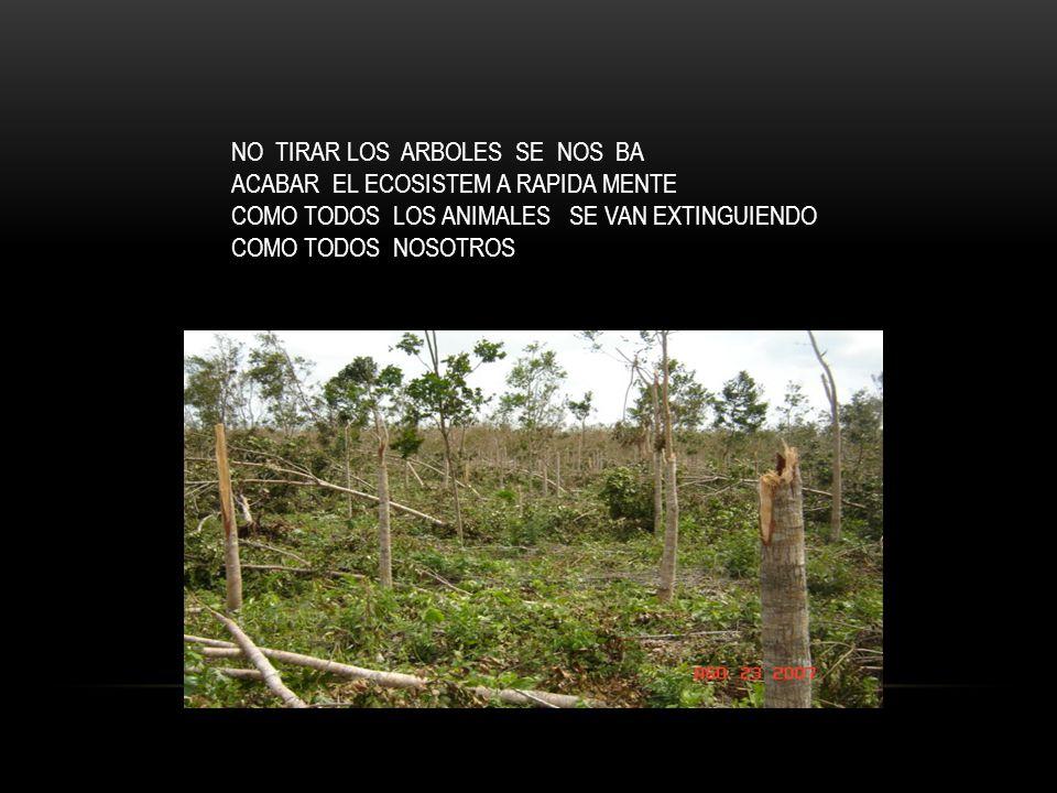 NO TIRAR LOS ARBOLES SE NOS BA ACABAR EL ECOSISTEM A RAPIDA MENTE COMO TODOS LOS ANIMALES SE VAN EXTINGUIENDO COMO TODOS NOSOTROS