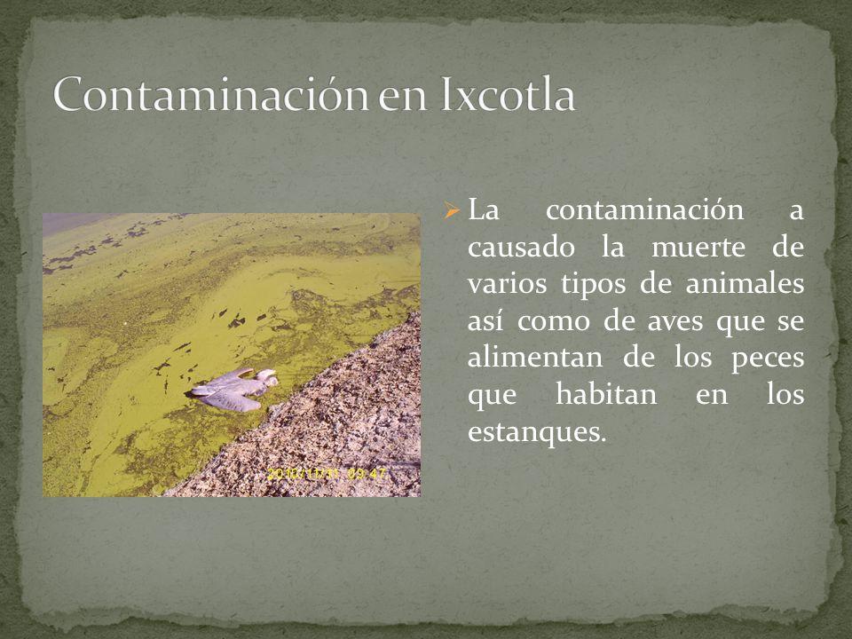 La contaminación a causado la muerte de varios tipos de animales así como de aves que se alimentan de los peces que habitan en los estanques.