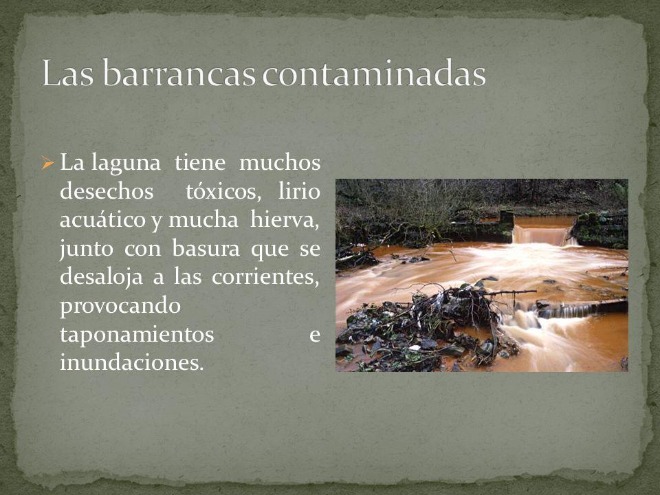 La laguna tiene muchos desechos tóxicos, lirio acuático y mucha hierva, junto con basura que se desaloja a las corrientes, provocando taponamientos e