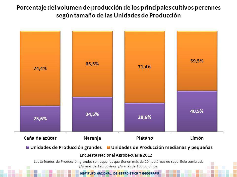 Porcentaje del volumen de producción de los principales cultivos perennes según tamaño de las Unidades de Producción Las Unidades de Producción grande